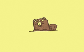 Картинка животное, минимализм, хвост, бобер, желтый фон, выглядывает, beaver