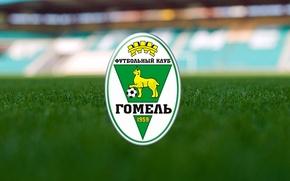 Картинка football, fanart, belarus, беларусь, fc gomel, гомель, gomel