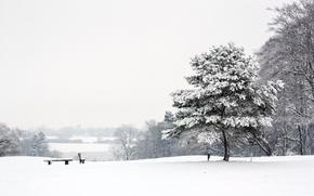 Картинка зима, пейзаж, парк