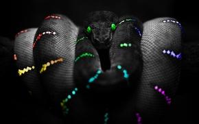 Обои Snake, Snake Colours, Цвета, Змея