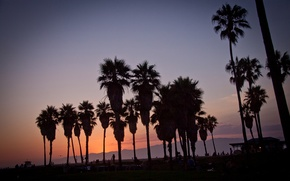 Картинка summer, california, sunset, usa, los angeles, palm, vennice beach