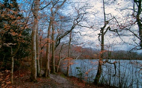 Картинка осень, лес, небо, деревья, озеро, тропинка