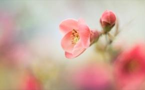 Картинка цветы, настроение, нежно
