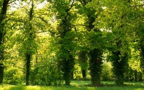 Картинка зелень, парк, green, Деревья, trees, park