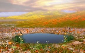 Картинка цветы, горы, озеро, коллаж