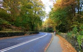 Картинка дорога, осень, листва, road, Autumn, leaves, fall