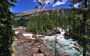 Картинка лес, деревья, горы, река, Канада, Alberta, Canada, Jasper National Park