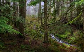 Картинка лес, деревья, ручей, заросли
