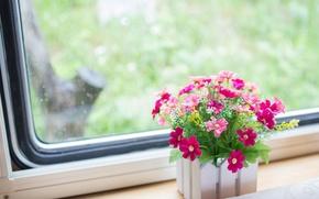 Картинка цветы, окно, подоконник, розовые, вазон