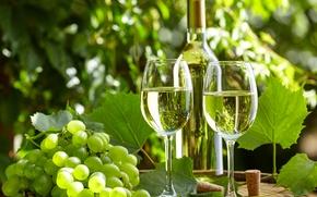 Картинка зелень, листья, вино, бутылка, сад, бокалы, виноград, пробки, бочка, боке