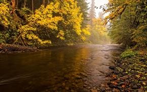 Картинка осень, лес, небо, деревья, река, камни
