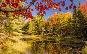 Обои небо, лес, пруд, озеро, деревья, осень