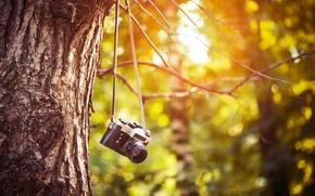Картинка зелень, листья, деревья, ветки, фон, дерево, обои, размытие, камера, утро, день, фотоаппарат, пленка, wallpaper, листочки, …