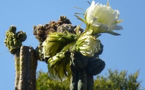 Картинка cactus, pinya de rosa, blanes