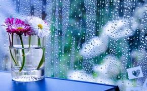 Обои цветы, стакан, стекло, капли
