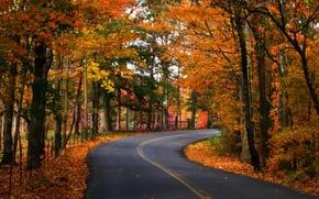 Картинка дорога, осень, листья, деревья, природа, фото