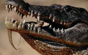 Картинка crocodile, mouth, reptile, teeth