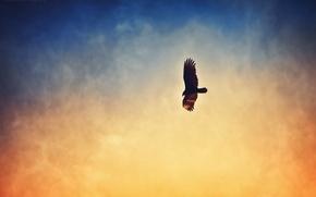 Картинка небо, птица, дымка
