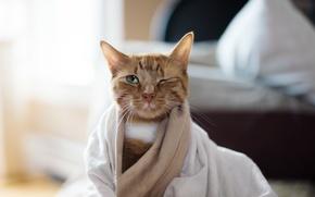 Картинка кошка, усы, взгляд, глаз, фон