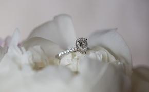 Картинка цветок, роза, кольцо, обручальное
