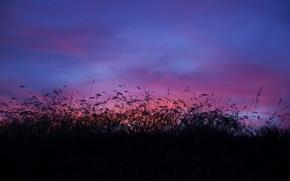 Картинка поле, небо, облака, сумерки, высокая трава
