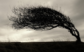 Обои дерево, 154, ветки, наклон