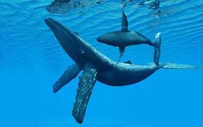 Картинка вода, океан, глубина, киты