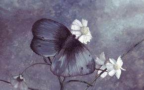 Обои бабочка, рисунок, цвет, ромашки, синяя