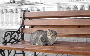 Картинка море, кошка, кот, скамейка