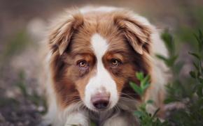 Картинка обработка, рыжая, собачка, фильтр, Dina Telhami