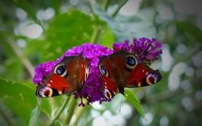 Картинка бабочка, узор, крылья, цветок, растение