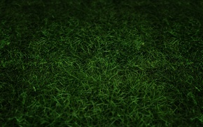 Картинка трава, природа, темнота, тона, затемнение, компьютерная графика
