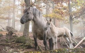 Обои лес, деревья, лошадь