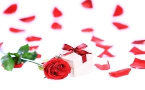 Картинка подарок, романтика, роза, лепестки, rose, бант, красная, коробочка, gift, petals, Valentines Day