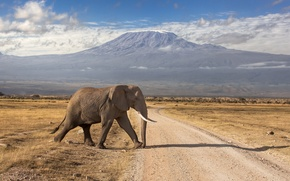 Картинка дорога, горы, слон, вулкан, Кения, потухший