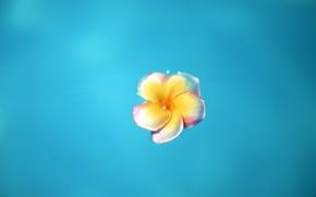 Обои цветок, синий, Минимализм