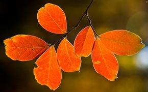 Картинка осень, листья, природа, дерево, tree, макро leaves, nature pictures