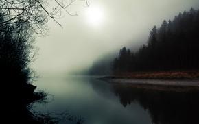Обои туман, река, лес, природа