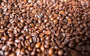 Обои зерна, много, кофе
