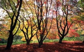 Картинка осень, лес, небо, листья, деревья