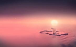 Обои солнце, медведь, вода, льдина