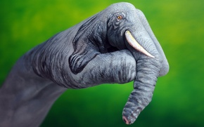 Картинка зеленый, фон, слон, рука
