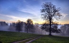 Обои дорога, поле, пейзаж, закат, дерево