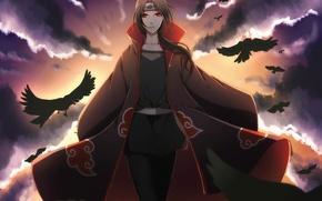 Картинка облака, птицы, вороны, naruto, art, Uchiha Itachi