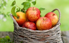 Обои корзина, яблоки, фрукты, осень, листья