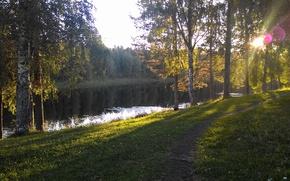 Картинка лес, деревья, Солнце