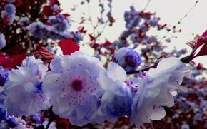 Картинка ветка, Весна, цветущая ветка