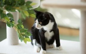 Картинка кошка, кот, листья, растение, черно-белая