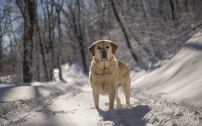 Картинка зима, взгляд, друг, собака