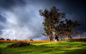 Картинка небо, трава, деревья, тучи, природа, Nature, sky, view, scenery, picture, green grass, old tree, грозовые, …